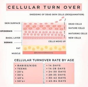 New skin cells are created in the Basal layer. As they age and die, they move upwards towards the top of our skin. Once they reach the top of our skin, the cells fall off.